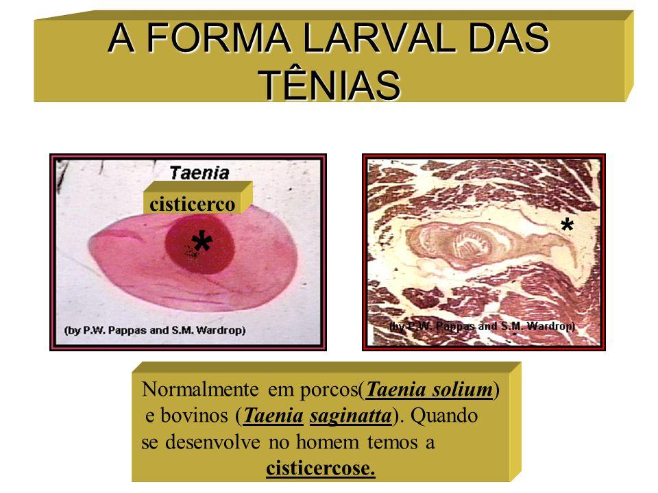 A FORMA LARVAL DAS TÊNIAS