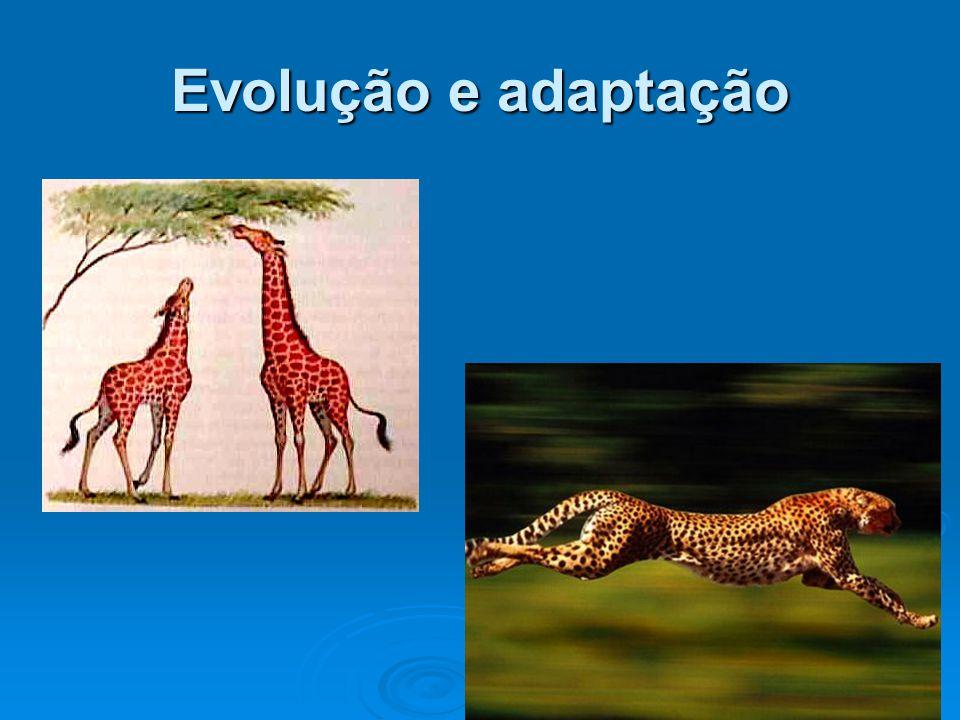 Evolução e adaptação