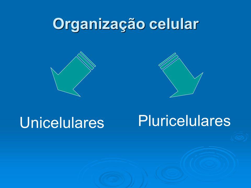 Organização celular Pluricelulares Unicelulares