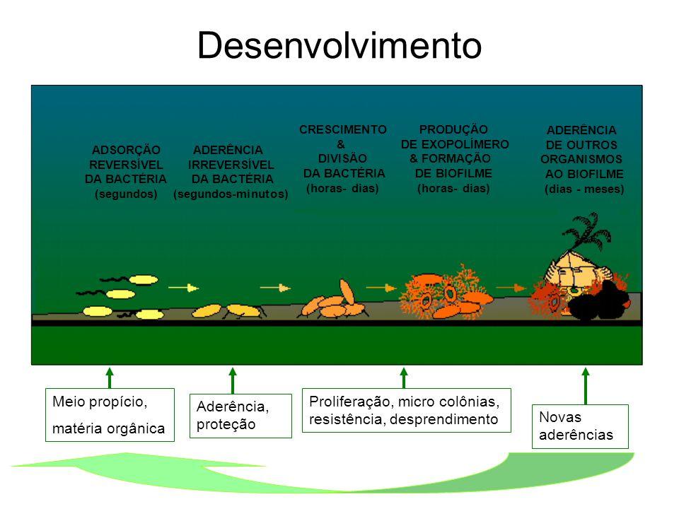 Desenvolvimento Meio propício, matéria orgânica