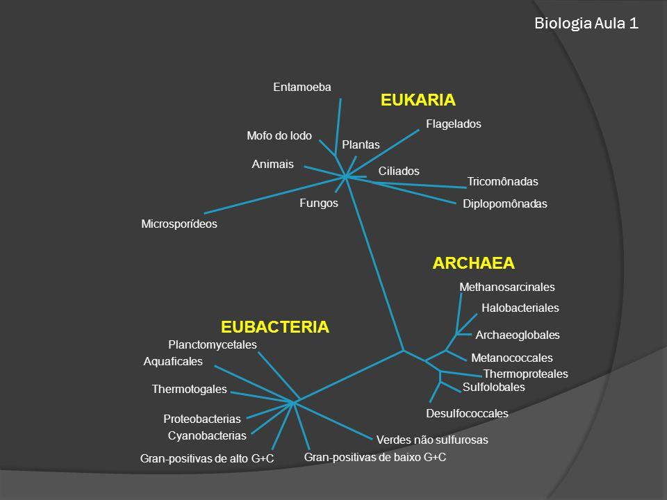 Biologia Aula 1 EUKARIA ARCHAEA EUBACTERIA Entamoeba Flagelados