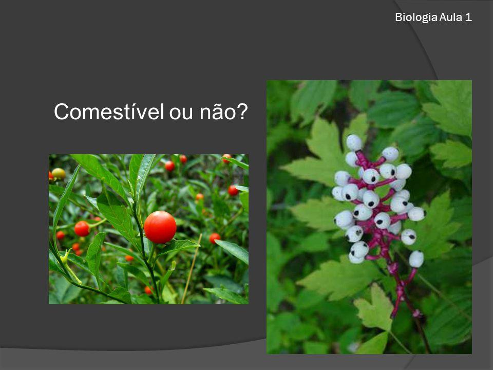 Biologia Aula 1 Comestível ou não