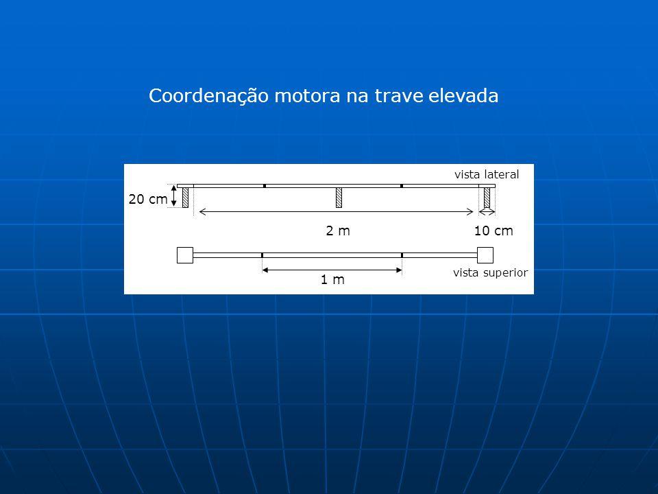 Coordenação motora na trave elevada