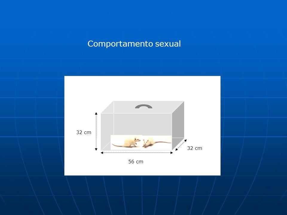 Comportamento sexual 56 cm 32 cm