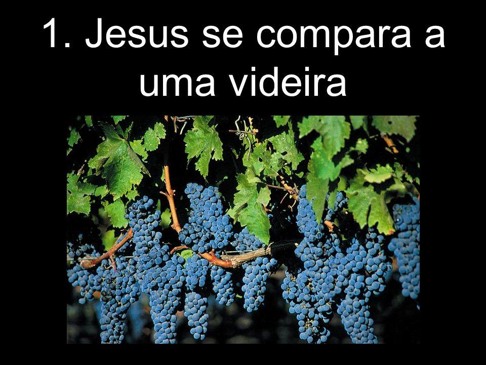 1. Jesus se compara a uma videira