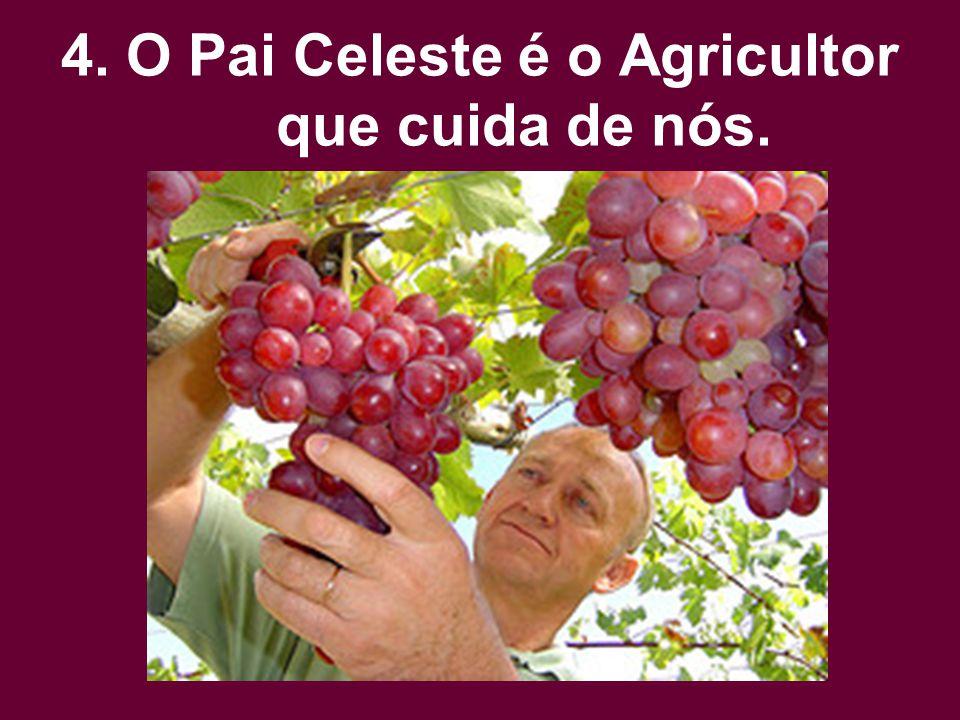 4. O Pai Celeste é o Agricultor que cuida de nós.