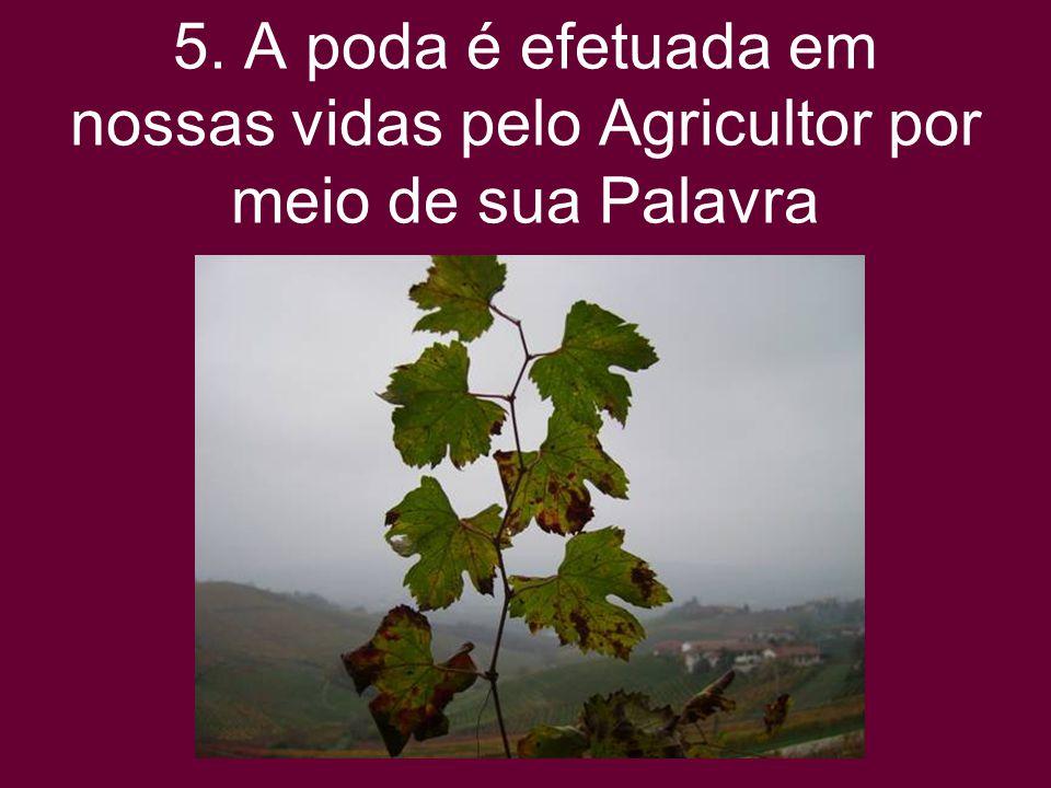 5. A poda é efetuada em nossas vidas pelo Agricultor por meio de sua Palavra