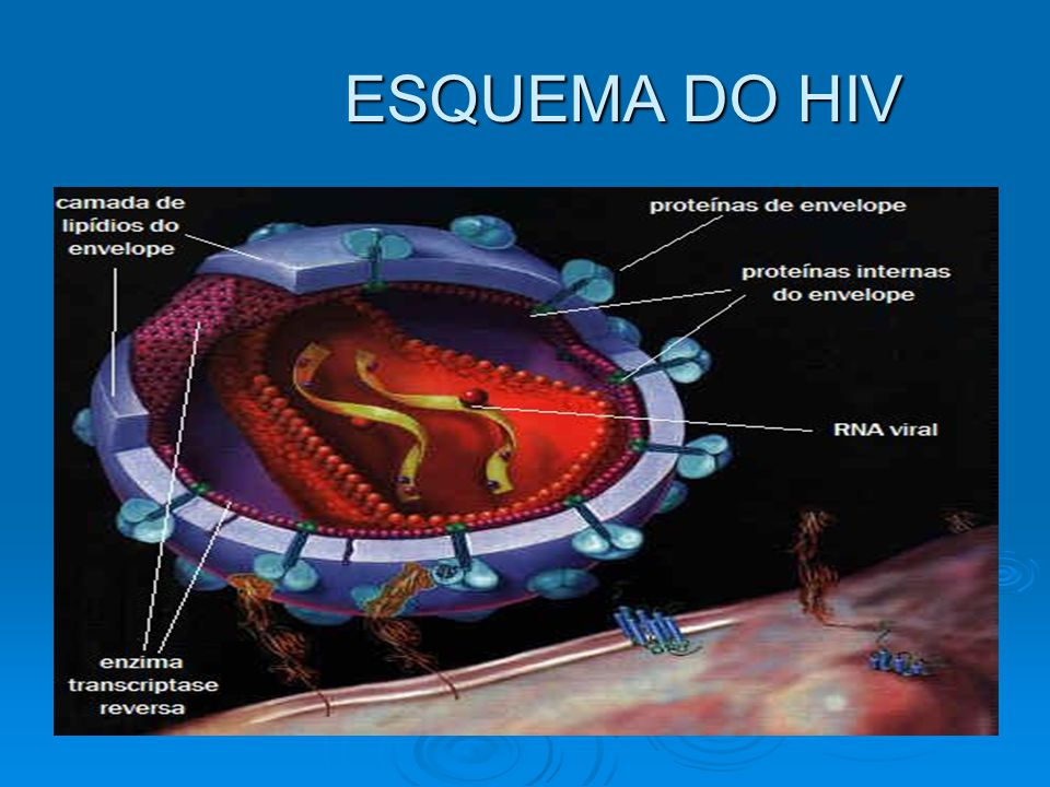 ESQUEMA DO HIV