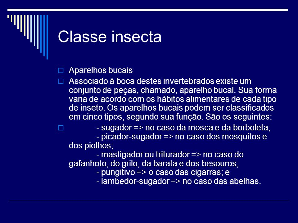 Classe insecta Aparelhos bucais