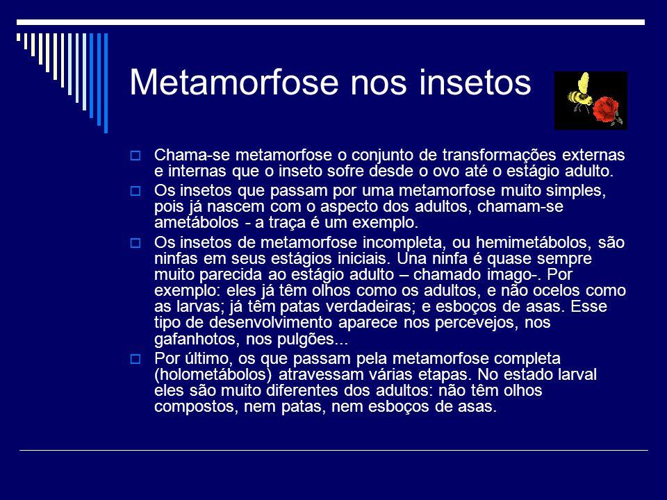 Metamorfose nos insetos
