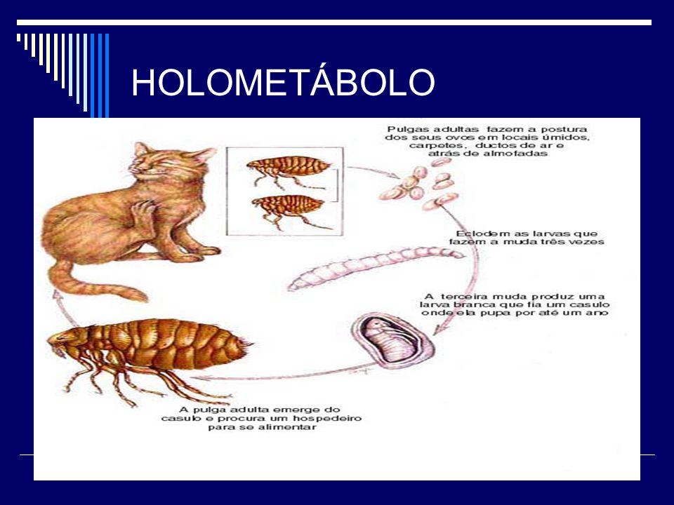 HOLOMETÁBOLO