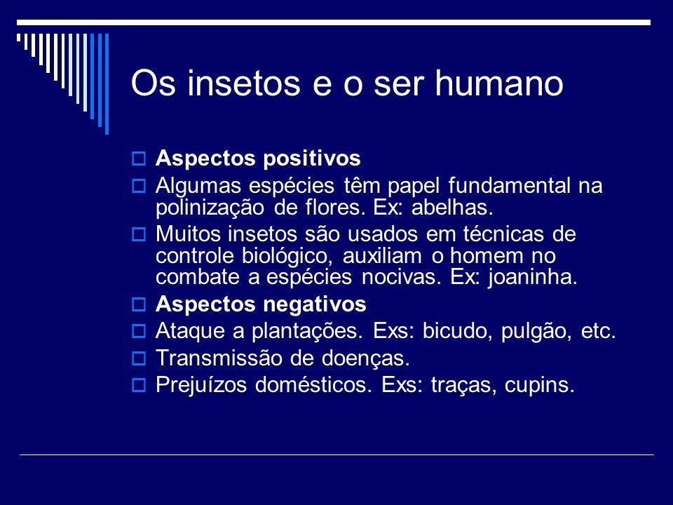 Os insetos e o ser humano