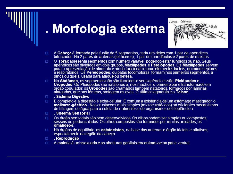 . Morfologia externa