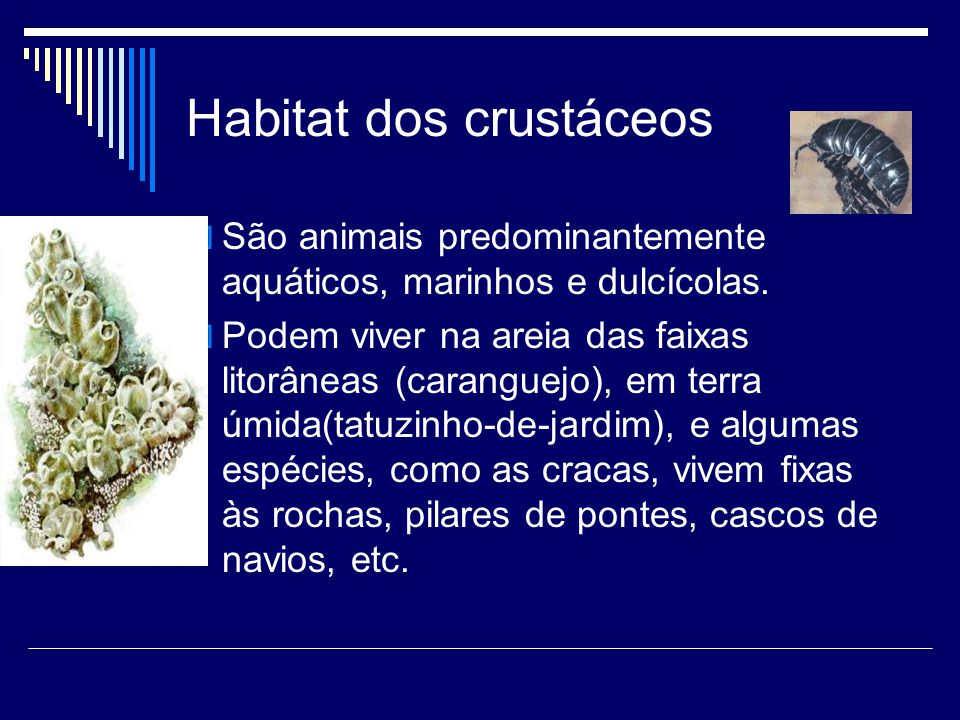 Habitat dos crustáceos