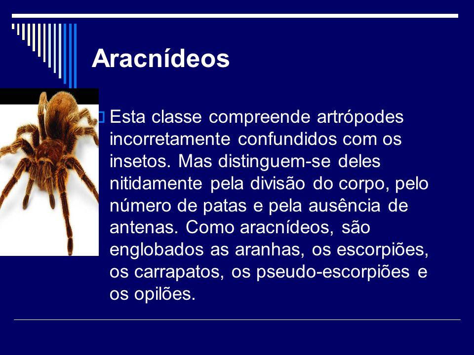 Aracnídeos