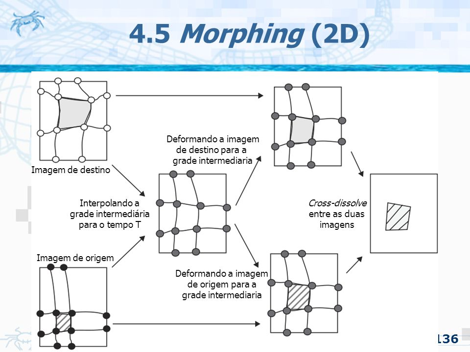 4.5 Morphing (2D) Deformando a imagem de destino para a grade intermediaria. Imagem de destino.