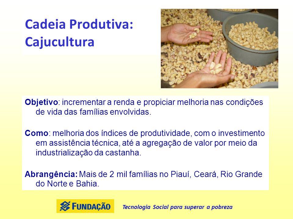 Cadeia Produtiva: Cajucultura