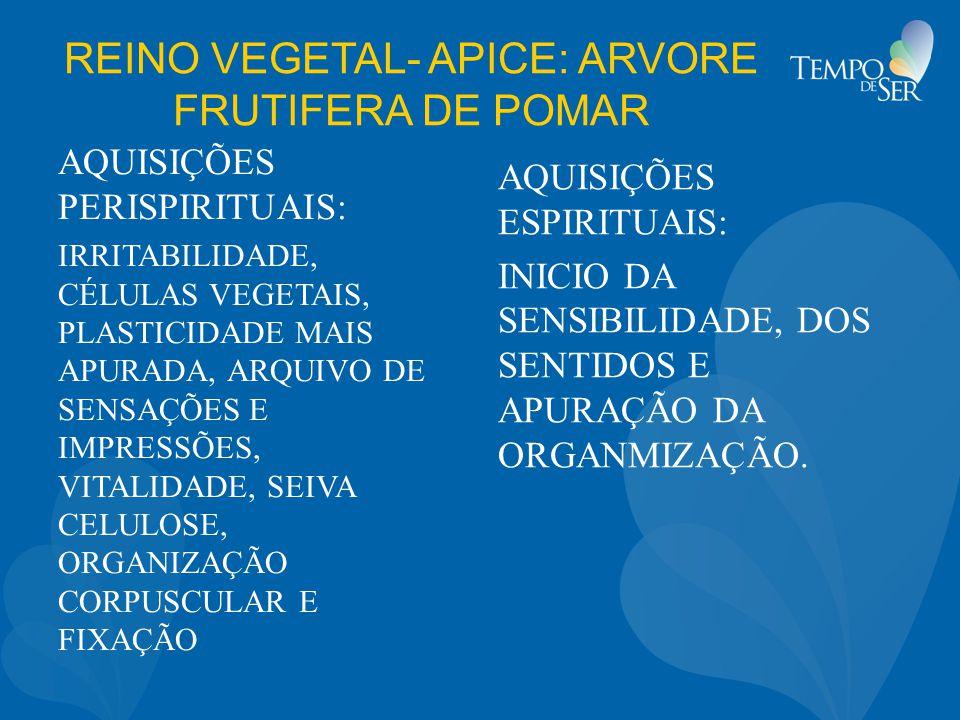 REINO VEGETAL- APICE: ARVORE FRUTIFERA DE POMAR