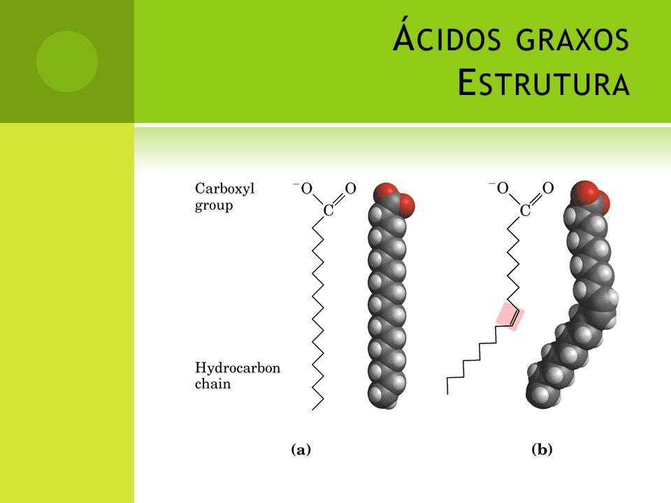 Ácidos graxos Estrutura