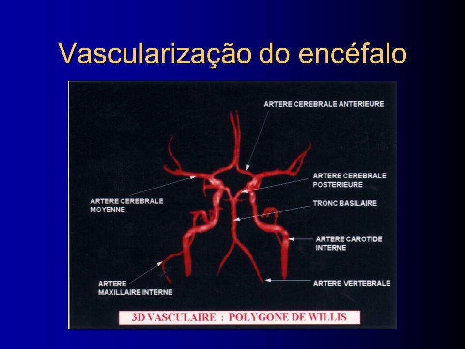 Vascularização do encéfalo