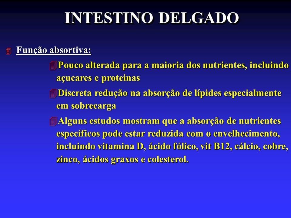 INTESTINO DELGADO Função absortiva: