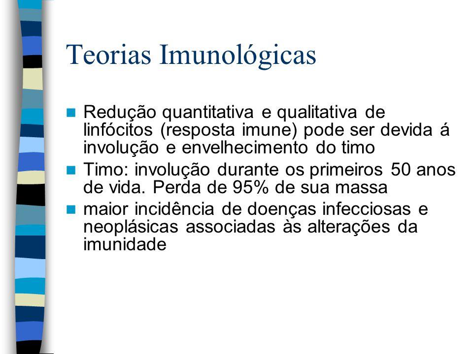 Teorias Imunológicas Redução quantitativa e qualitativa de linfócitos (resposta imune) pode ser devida á involução e envelhecimento do timo.