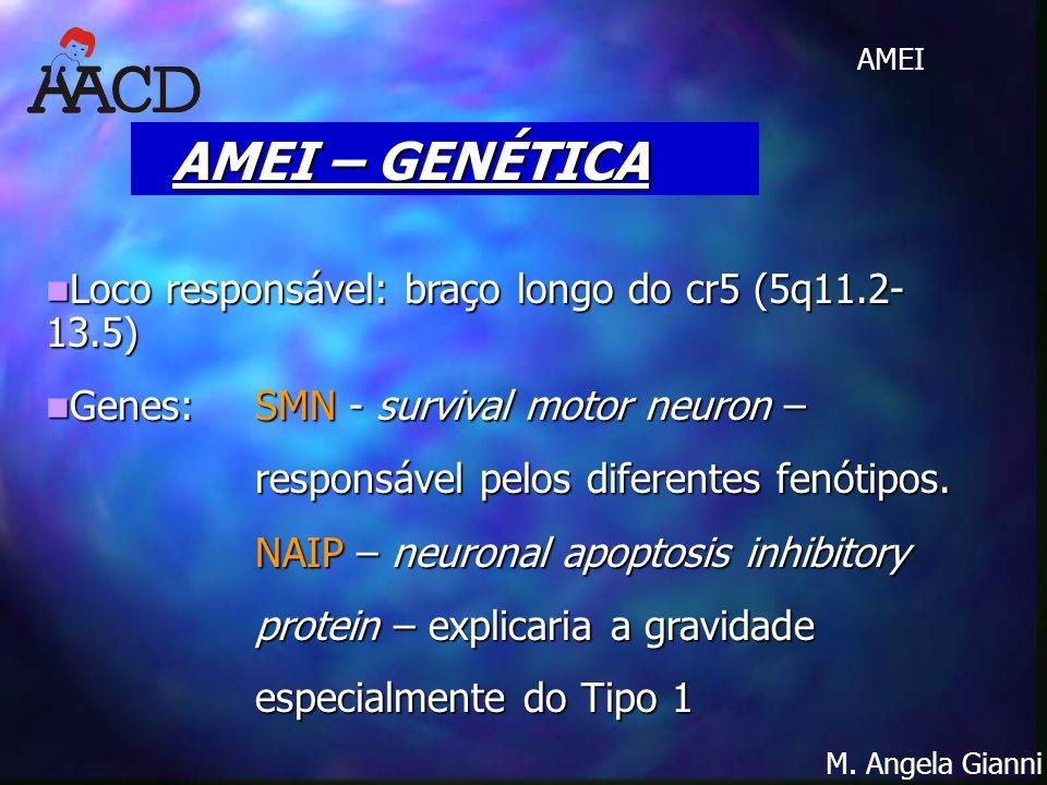 AMEI – GENÉTICA Loco responsável: braço longo do cr5 (5q11.2- 13.5)
