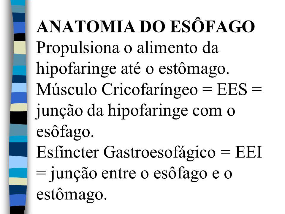 ANATOMIA DO ESÔFAGO Propulsiona o alimento da hipofaringe até o estômago.
