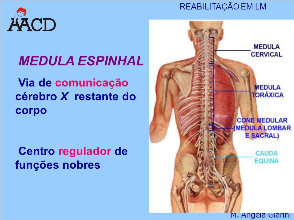 MEDULA ESPINHAL Via de comunicação cérebro X restante do corpo Centro regulador de funções nobres