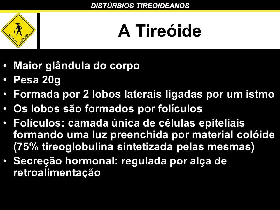 A Tireóide Maior glândula do corpo Pesa 20g