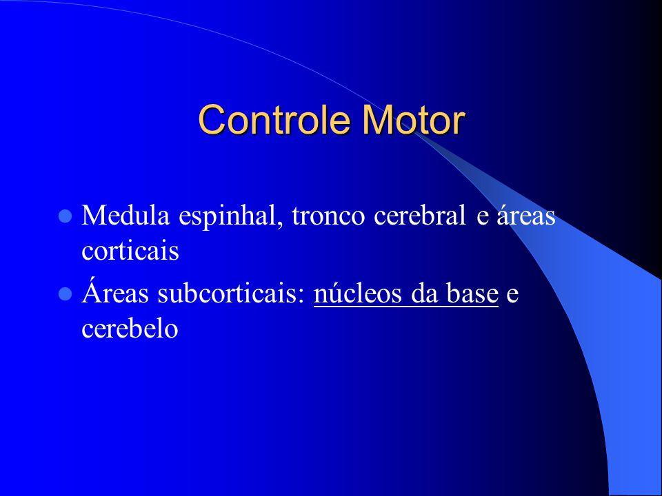 Controle Motor Medula espinhal, tronco cerebral e áreas corticais