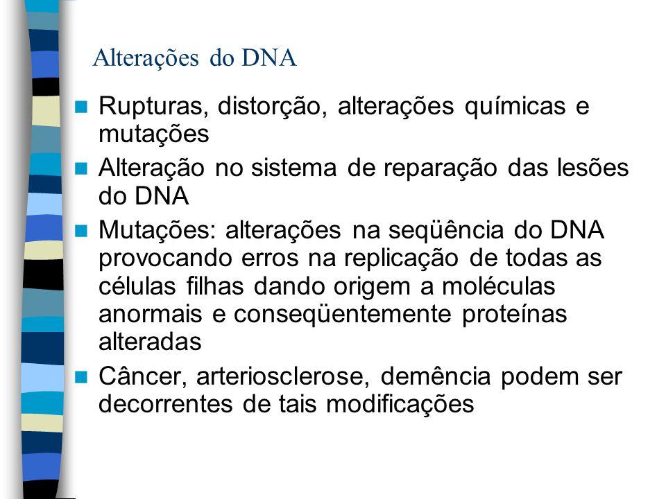 Alterações do DNA Rupturas, distorção, alterações químicas e mutações. Alteração no sistema de reparação das lesões do DNA.