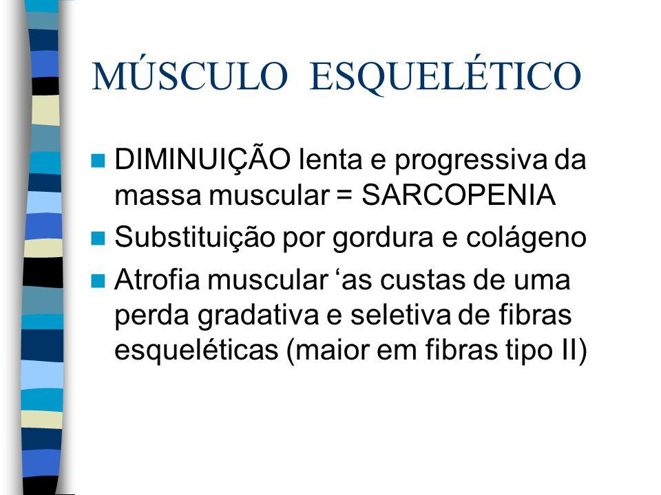 MÚSCULO ESQUELÉTICO DIMINUIÇÃO lenta e progressiva da massa muscular = SARCOPENIA. Substituição por gordura e colágeno.