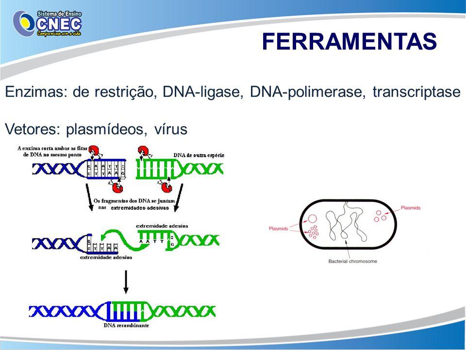 FERRAMENTAS Enzimas: de restrição, DNA-ligase, DNA-polimerase, transcriptase.