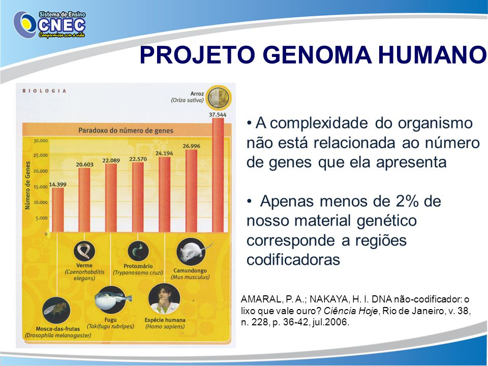 PROJETO GENOMA HUMANO A complexidade do organismo não está relacionada ao número de genes que ela apresenta.