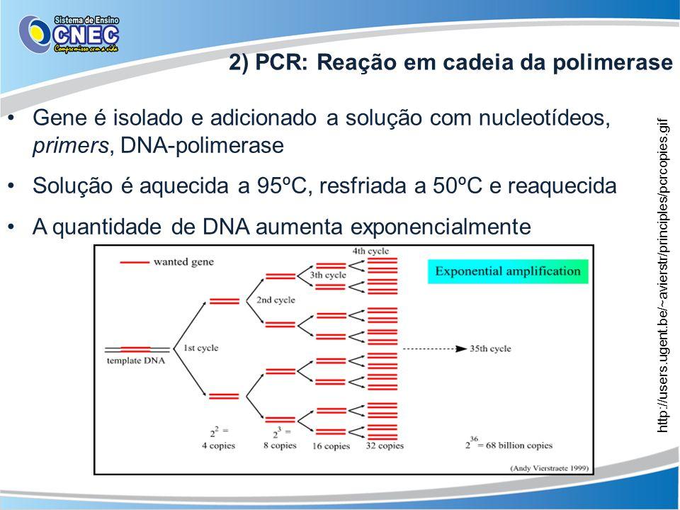 2) PCR: Reação em cadeia da polimerase