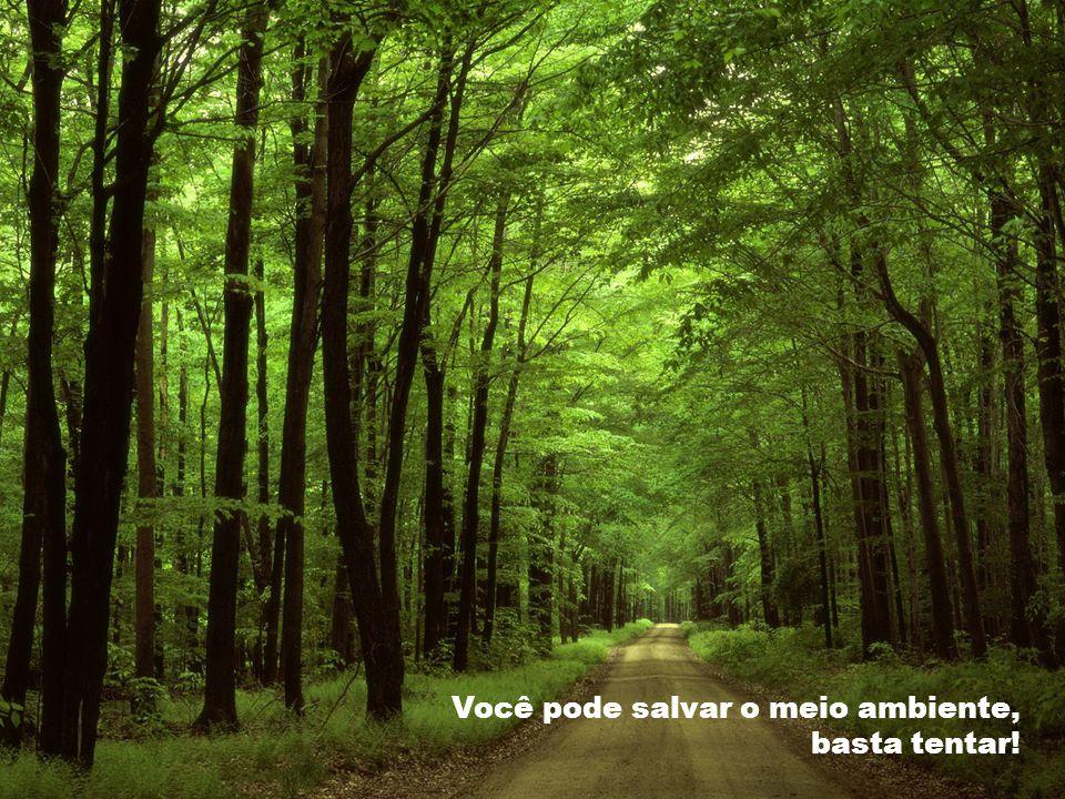 ; Você pode salvar o meio ambiente, basta tentar!