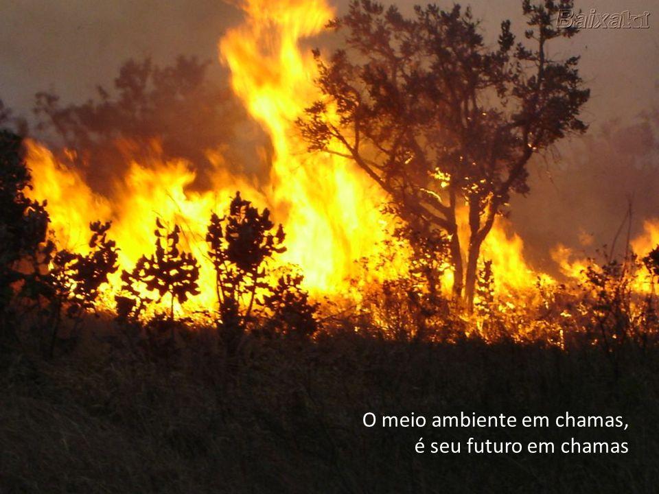 O meio ambiente em chamas,