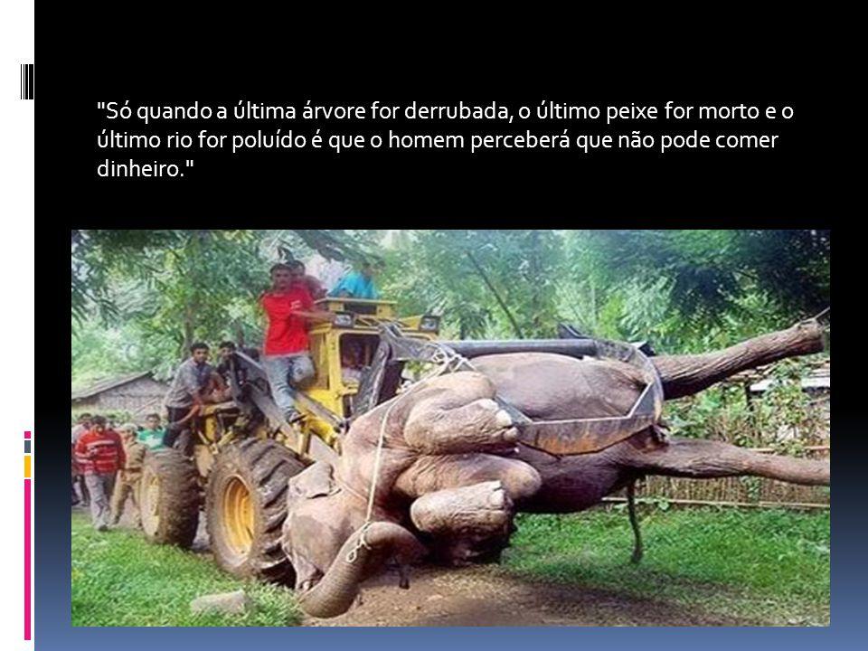 Só quando a última árvore for derrubada, o último peixe for morto e o último rio for poluído é que o homem perceberá que não pode comer dinheiro.