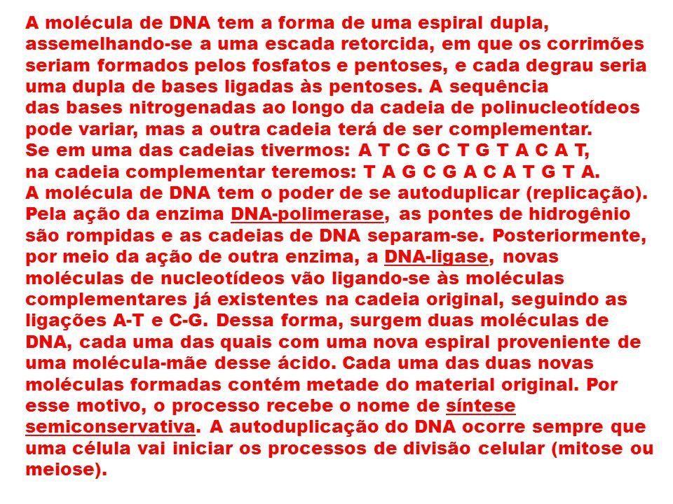 A molécula de DNA tem a forma de uma espiral dupla, assemelhando-se a uma escada retorcida, em que os corrimões