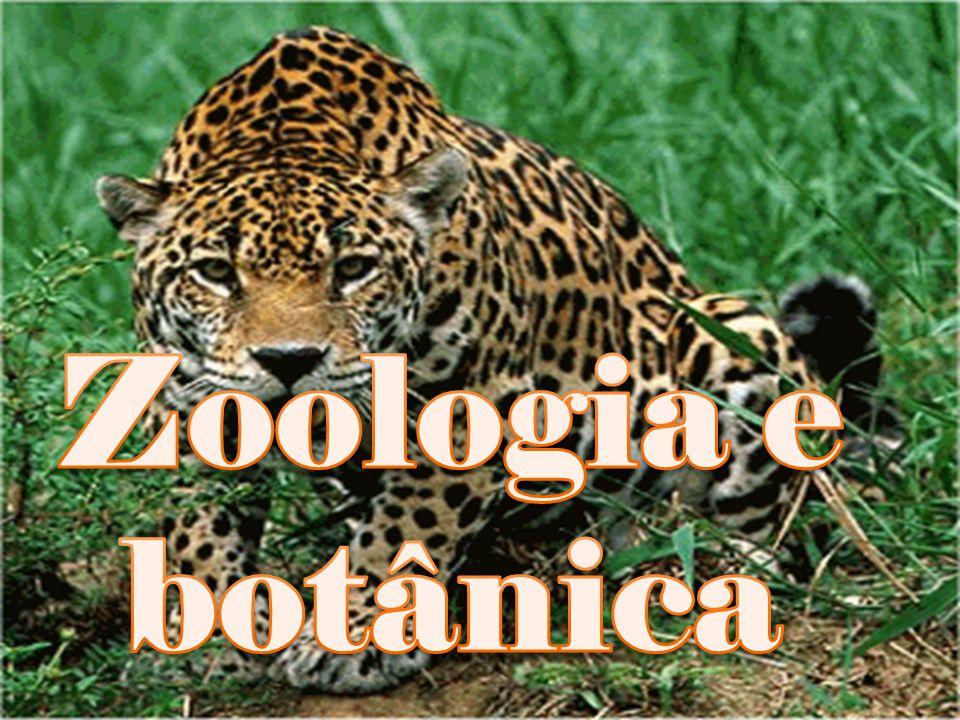Zoologia e botânica