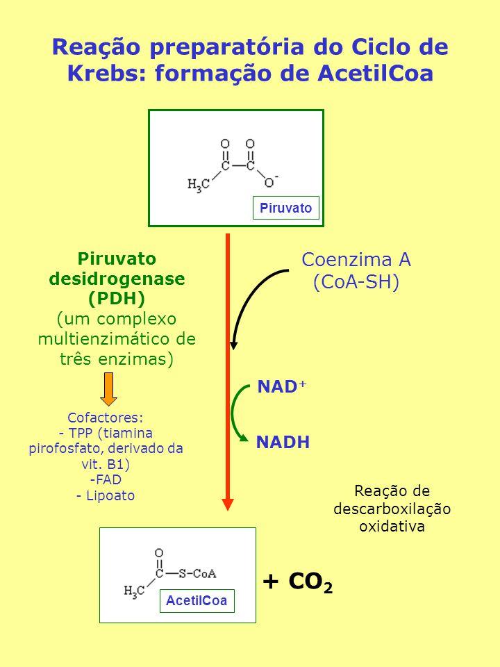 Reação preparatória do Ciclo de Krebs: formação de AcetilCoa