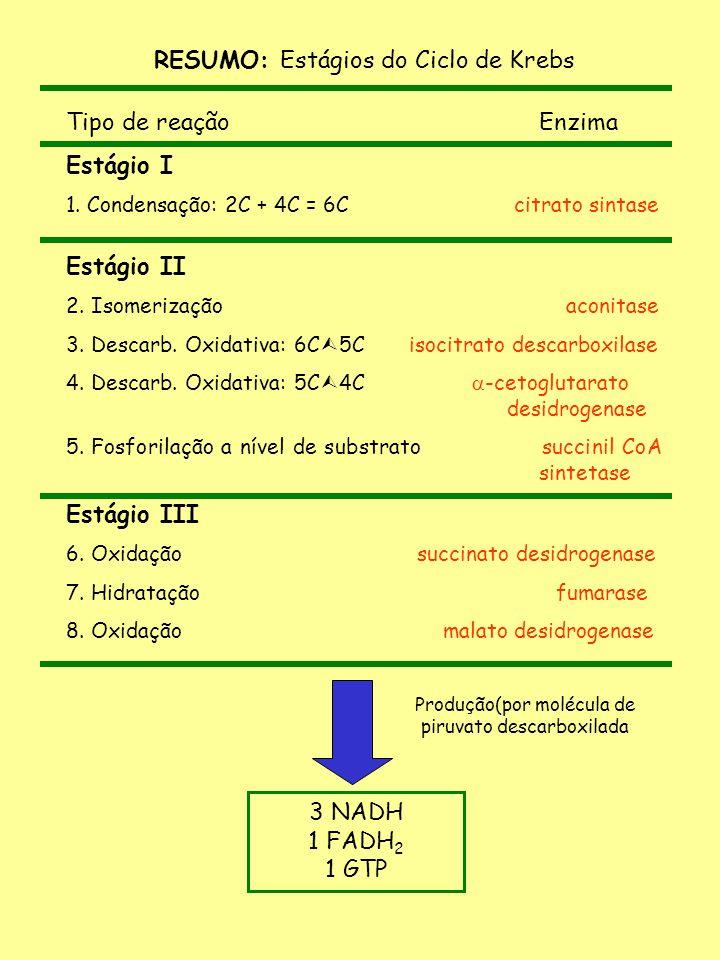 RESUMO: Estágios do Ciclo de Krebs Tipo de reação Enzima Estágio I