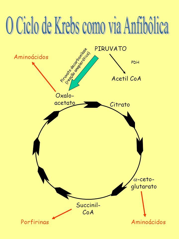 O Ciclo de Krebs como via Anfibôlica