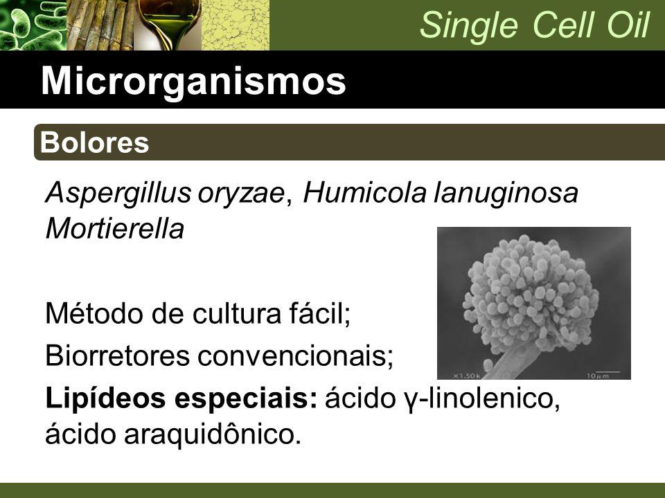 Microrganismos Bolores