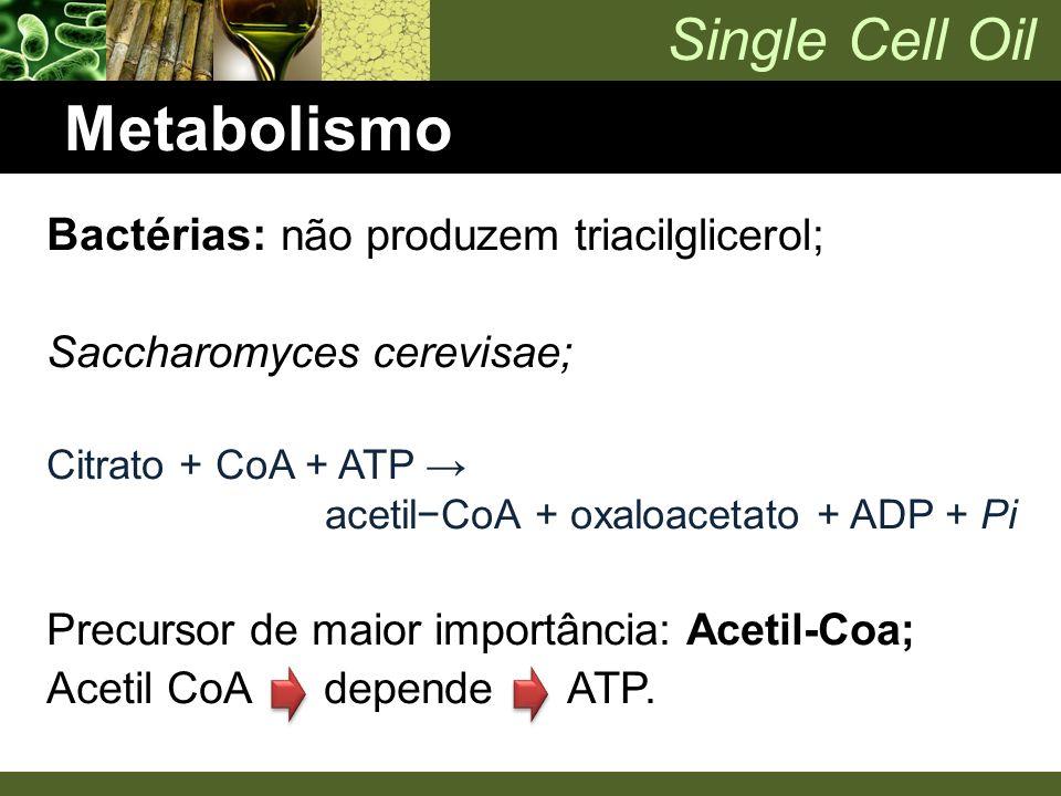 Metabolismo Bactérias: não produzem triacilglicerol;