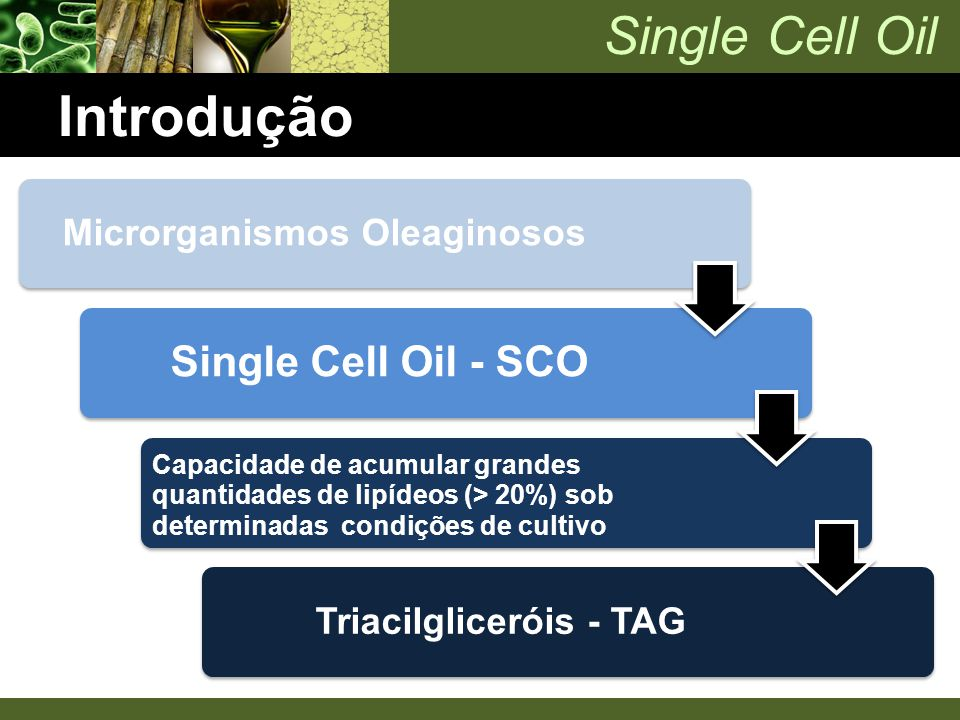 Microrganismos Oleaginosos Triacilgliceróis - TAG