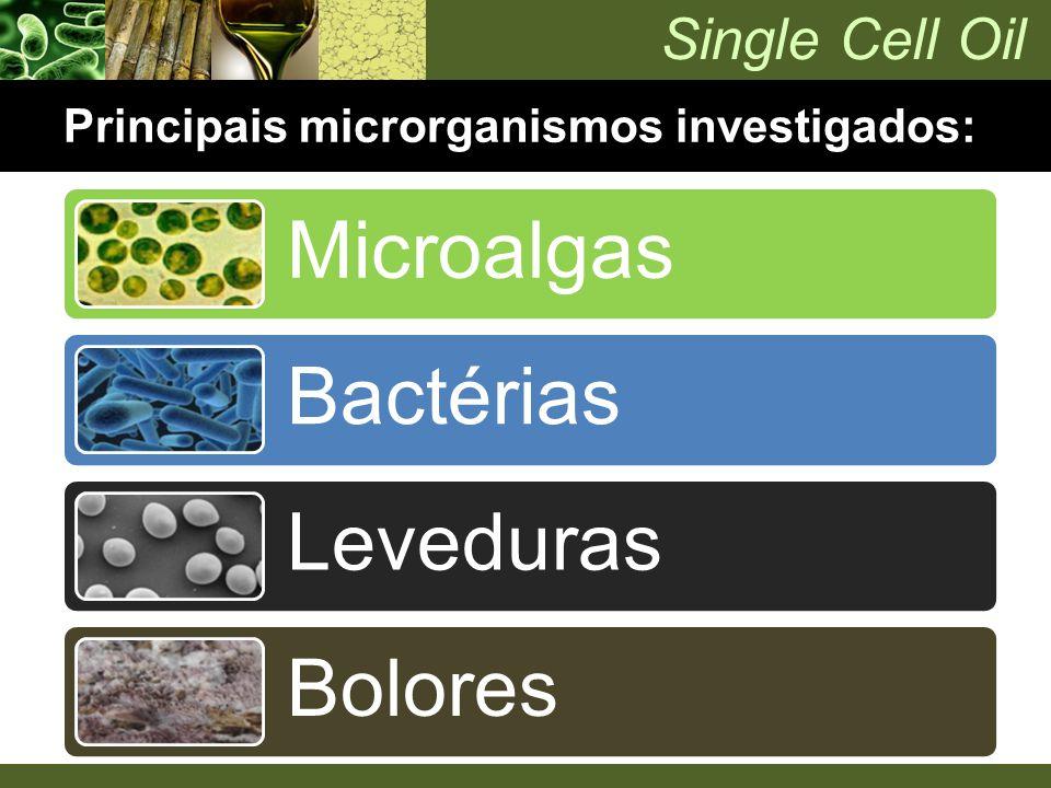 Principais microrganismos investigados: