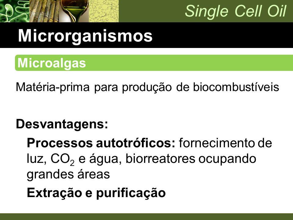 Microrganismos Microalgas Desvantagens: