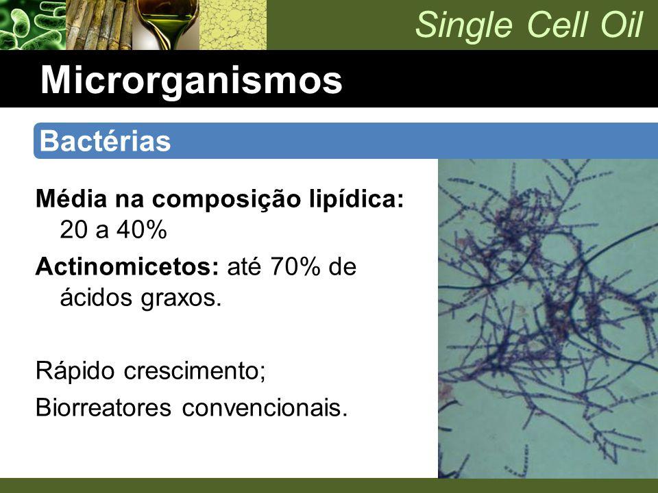 Microrganismos Bactérias